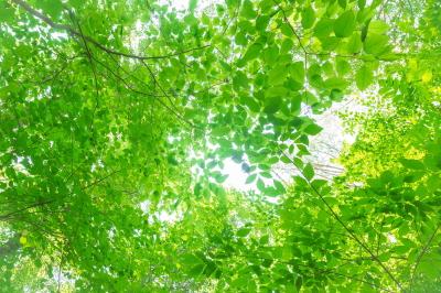 20140515_leaves_s.jpg