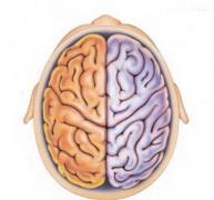 scalar-Brain3.jpg