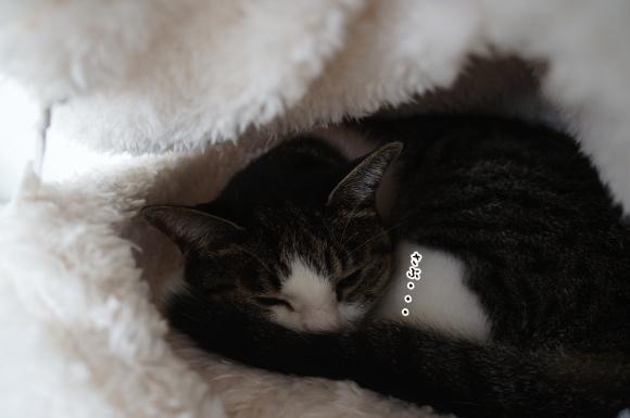 寒いと眠くなるんです