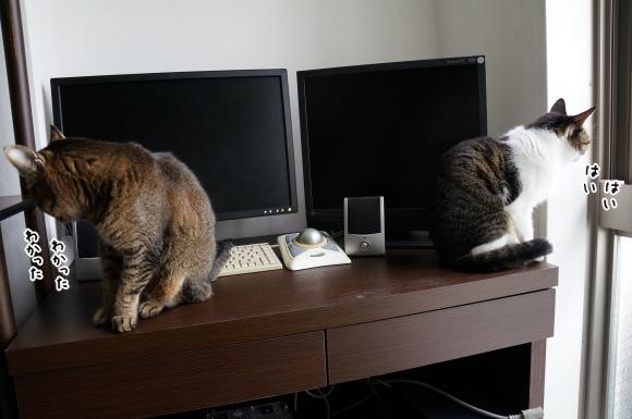 猫とは無責任なもの