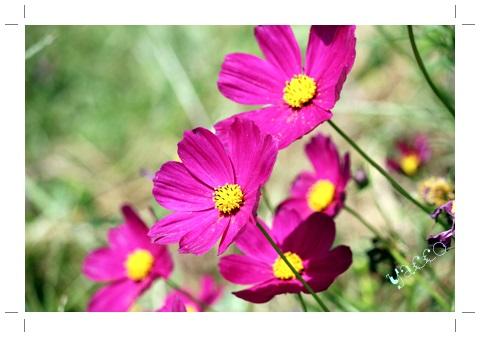 氷取沢のお花たち