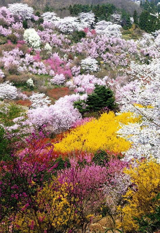 花ざかりの福島へ 2