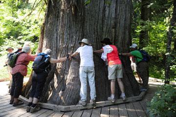 blog 110 Mt. Ranier, Stevens Canyon, Grove of the Patriarchs, WA_DSC0871-8.4.14.(2).jpg