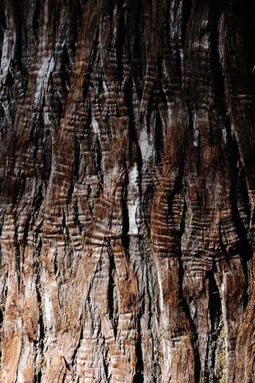 blog 110 Mt. Ranier, Stevens Canyon, Grove of the Patriarchs, WA_DSC0868-8.4.14.(2).jpg