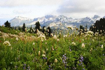 blog 116 Mt. Rainier, Skyline Trail, Flower Meadow, WA_DSC1787-8.6.14.(6).jpg