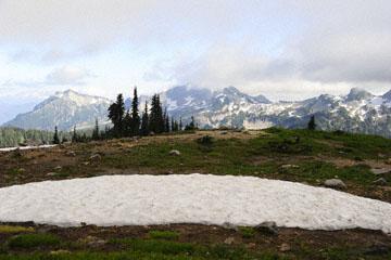 blog 116 Mt. Rainier, Skyline Trail, Flower Meadow, WA_DSC1780-8.6.14.(6).jpg