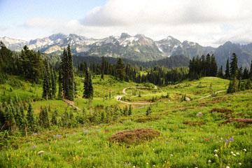 blog 116 Mt. Rainier, Dead Horse Creek Trail, Flower Meadow, WA_DSC1796-8.6.14.(6).jpg