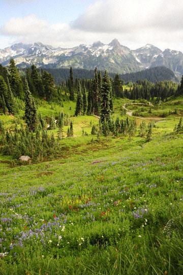 blog 116 Mt. Rainier, Dead Horse Creek Trail, Flower Meadow, WA_DSC1793-8.6.14.(6).jpg